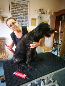 Hunde - Hunde Salon HundePension Momo Hundebetreuung