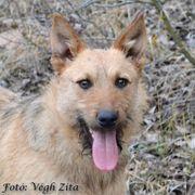 Puszedli verschmuster Herzenshund ca 11