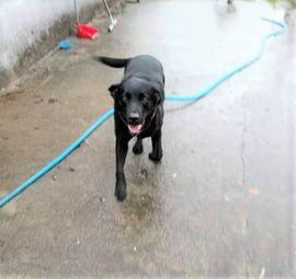 BLACKY sucht sein Traumzuhause: Kleinanzeigen aus Sulzfeld Baden - Rubrik Hunde
