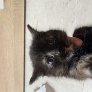 Baby Katze Kitten