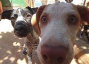 2 süsse Hundewelpen