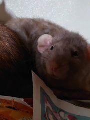 Nurnoch 2 Rattenmädels suchen neue