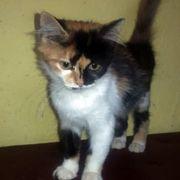Katzenmädchen Sally wartet auf Dich
