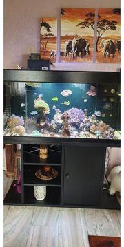 Meerwasseraquarium inkl Inhalt und Zubehör