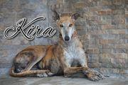 Schenken Sie Kira Ihre Aufmerksamkeit