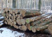 Buche Brennholz Stämme