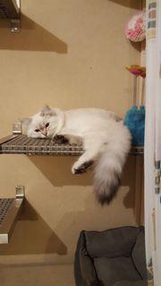 Hilfe Katze entlaufen