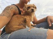 Kleine Hundefamilie