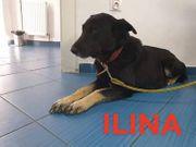 Ilina sucht gemütliches zuhause