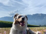 Hundesitter - Gassi gehen Service