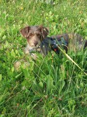 Charly sucht Hunde Anhänger zum