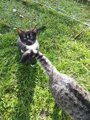 3 süße Babykatzen suchen ein