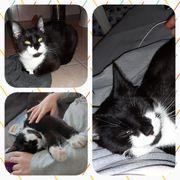 Katze Lina kastriert geimpft gechipt