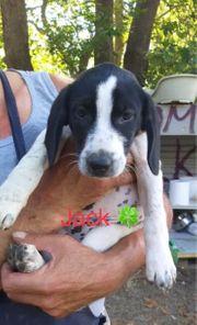 Kleiner Jack sucht Zuhause