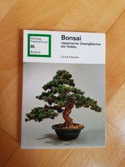 Bonsai - Japanische Zwergbäume als Hobby