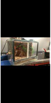 Geko mit Aquarium und inhalt
