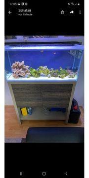 meerwasser Aquarium komplett