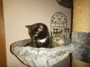 Kittengeschwisterpaar sucht neuen Wirkungskreis reserviert