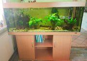 Süßwasser Aquarium Juwel Rio 450
