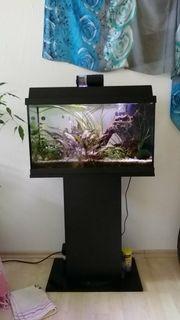 Aquarium mit Inhalt