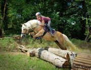 Seriöser Ankauf von Pferden Ponys