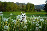 Hundebetreuung auf Stunden- bzw Tagesbasis