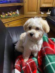 Liebevolle familiäre Betreuung für Hunde