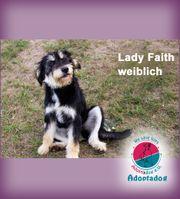 Lady Faith - ein außergewöhnliches Mädchen