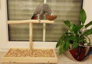 Papageienspielzeug Freisitz FENSTERBANK Tischfreisitz Hartholz