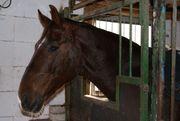 Reitbeteiligung für Voltigierpferd gesucht