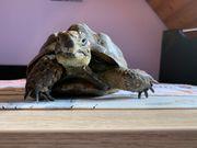 Schildkrötenbetreuung gesucht
