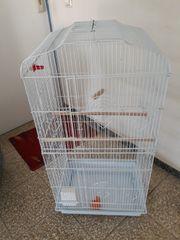 vögel Käfig Weiß Farbe