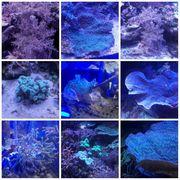 Diverse Korallen 5 20Euro