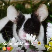 farbmaus what s app gruppe