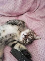Süsse Mix Kitte