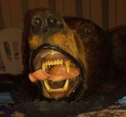 echtes Bärenfell