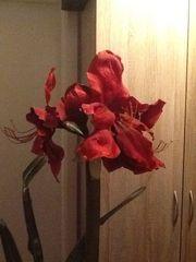 Dekoblume mit Blüte langem Stengel