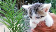Katzen - Hauskatze