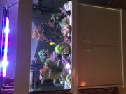 Komplett- Meerwasseraquarium 250 Liter