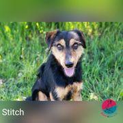 Stitch - ein kleiner Stich direkt