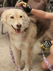 Bonita - ein Hundemädchen wie aus