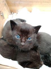 Katzenmama und Katzenbabys suchen ein