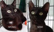 Momo Mimi süßes Katzen-Duo ca