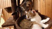 Mama mit Baby Katzen Mädchen