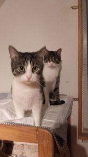 Katzengeschwister suchen gemeinsames Zuhause in
