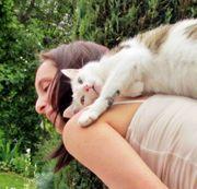 Tierbetreuung mobile Katzenbetreuung Katzensitting