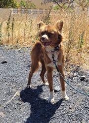 Agando- hübscher Hundebub aus dem
