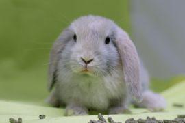 Kleintiere - Niedliche Zwergwidder-Babys aus Hobbyzucht