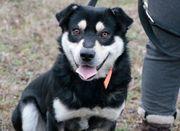 Oreo aktiver Hundemann ca 2