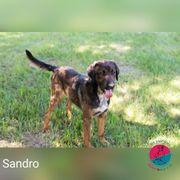 Sandro - Ein Gentleman ohnegleichen